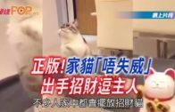 家貓「唔失威」出手招財冧主人