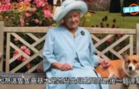 英女皇最後一隻哥基犬  因癌病被安樂死