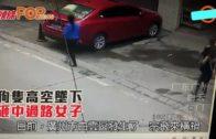 廣州:狗隻高空墜下 砸中過路女子