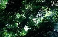 紀錄片《坂本龍一CODA》