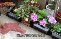 江蘇男任職髮型師  家中雞狗全被染上紫色