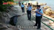赤柱發現海豚屍體  警方消防合力抬上岸