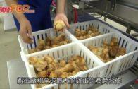 中國最大孵蛋廠  日孵40萬隻雛雞