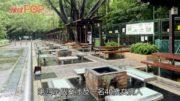 新增四宗本地感染登革熱  患者均到過獅子山公園