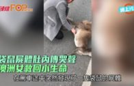 袋鼠屍體肚內傳哭聲  澳洲女救回小生命