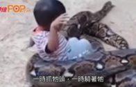 印尼小男孩把玩巨蟒 網民負評:想送死?