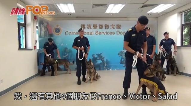 懲處「灰狼」光榮退役 昆明犬歡迎市民領養