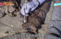 埃及發現7座古墓 藏木乃伊貓聖甲蟲