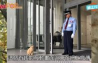 貓咪欲闖日美術館 保安攔截上演攻防戰