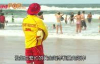 水母暴增刺傷逾萬人 昆士蘭海灘急關閉