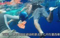 全球最巨大白鯊 「深藍」驚現