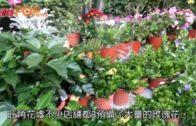 花價微升10%訂花量增 99支玫瑰最貴近4000元