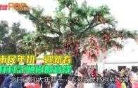 市民年初一迎新春 林村許願樹拋寶牒
