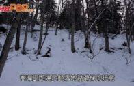 北海道踏雪尋湖 阿寒摩周國立公園