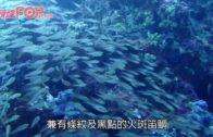 泰國頂級潛點 斯米蘭群島