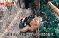 陶傑:虐殺動物刑期  加至十年仍不足