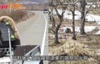 公路搶劫獵人午餐盒  俄棕熊逃之夭夭
