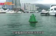 海豚出沒注意!  香港仔避風塘游弋