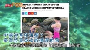 中國遊客殺海膽?  泰警證實泰媒散播假新聞