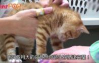 闖貨櫃「偷渡」意大利  中國小貓45天奇跡生還