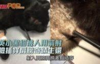 英小黑貓被人用箭射  險插穿肩膀奇蹟生還