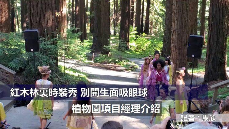(粵)紅木林裏時裝秀別開生面吸眼球
