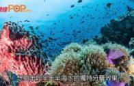 龜島海底歷奇
