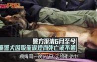 警方澄清6月至今 無警犬因吸催淚煙而死亡或不適