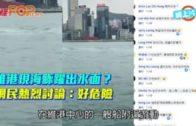 維港現海豚躍出水面?  網民熱烈討論:好危險