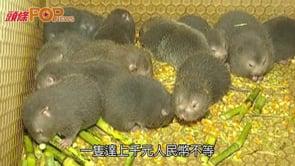 鍾南山推斷病毒源頭疑竹鼠  近年成餐桌美食