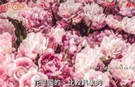 在花中看見美好世界