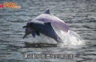 西貢深水灣發現3海豚擱淺  死因有待確定