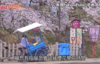 受暖春影響 民營氣象料東京櫻花3月19日早開
