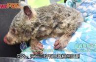 約5億動物亡釀生態浩劫 救援組織醫院眾籌倡助養