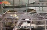 人大因野味市場泛濫 擬修改《野生動物保護法》