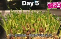 【2月18日 親子Daily】 抹茶飲品助促進免疫力