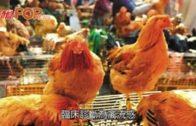 曾往深圳7歲童  感染H9禽流感