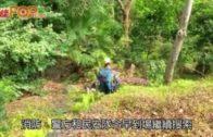 40歲遠足男柏架山失蹤三日 救援人員續搜索
