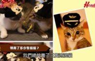 善待動物Jeffrey、Crystal與 貓貓Oki、Nala & Nago