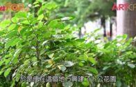 香港防疫的故事 (第一集)  由西營盤說起