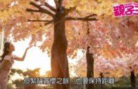 【活動資訊】放鬆心情  櫻花叢中找幸福感