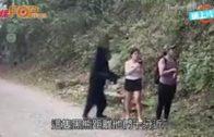 女子行山遇黑熊抱抱  淡定拿出手機和熊自拍
