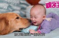 【5月28日 親子Daily】嬰孩與寵物共存