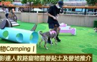寵物Camping|攝影達人教路寵物露營貼士及營地推介